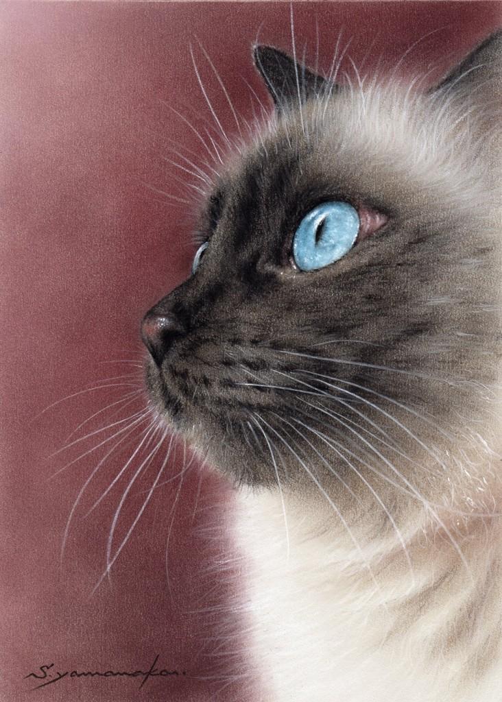 青の瞳 Ⅴ(聖路加用)