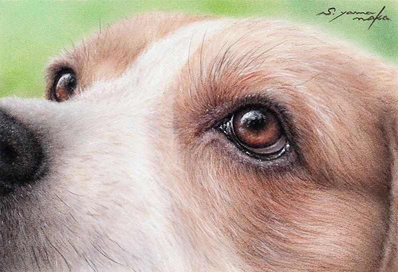 蜜柑色の瞳 (聖路加用)